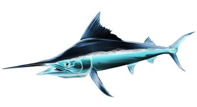Schwertfisch als Aufkleber