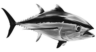 Thunfisch als Aufkleber
