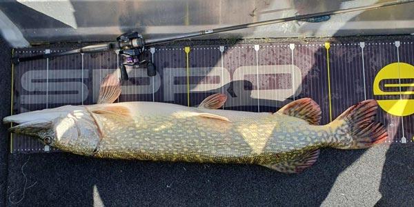 Fischmaßband als Teppich Aufkleber.