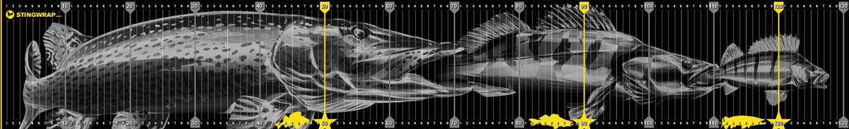 Fischmaßband mit Hecht Zander und Barsch